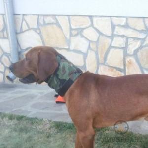Предпазна яка за ловни кучета