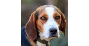 Защо е необходим GPS тракер за любимото ловно куче?